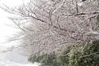 欅坂46 今 春が来て欅ちゃんはきれいに(可愛いく)なった 欅坂かわいい